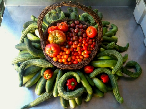 A giant pile of green cucumbers radiate from a central basket filled with red and orange heirloom and cherry tomatoes