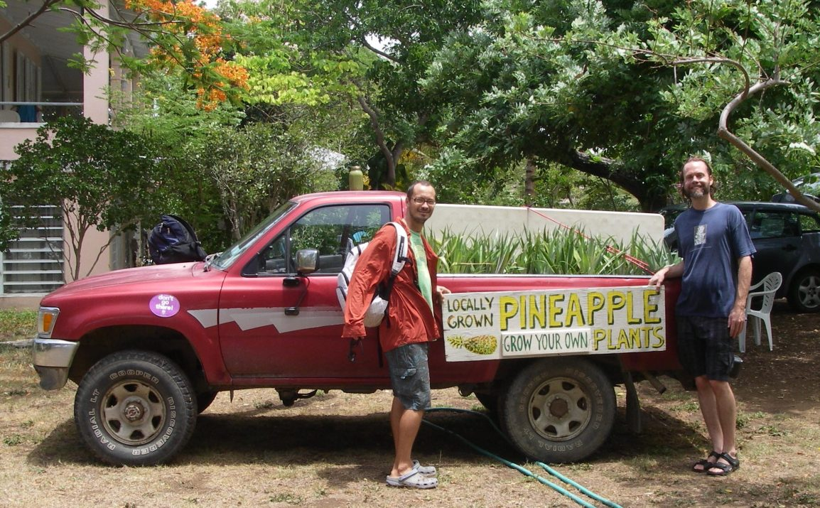 How to Plant Your Pineapple Slips