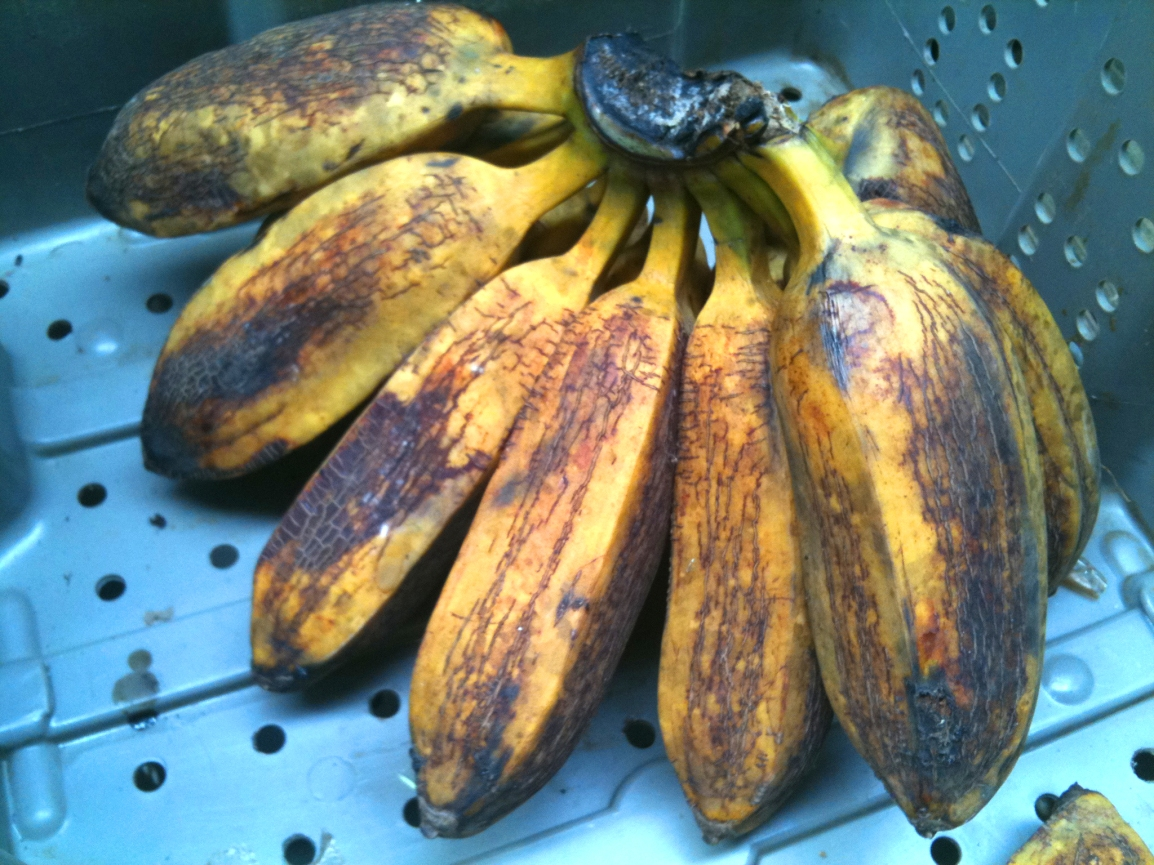 A bunch of beautiful ripe plantains at ARTfarm