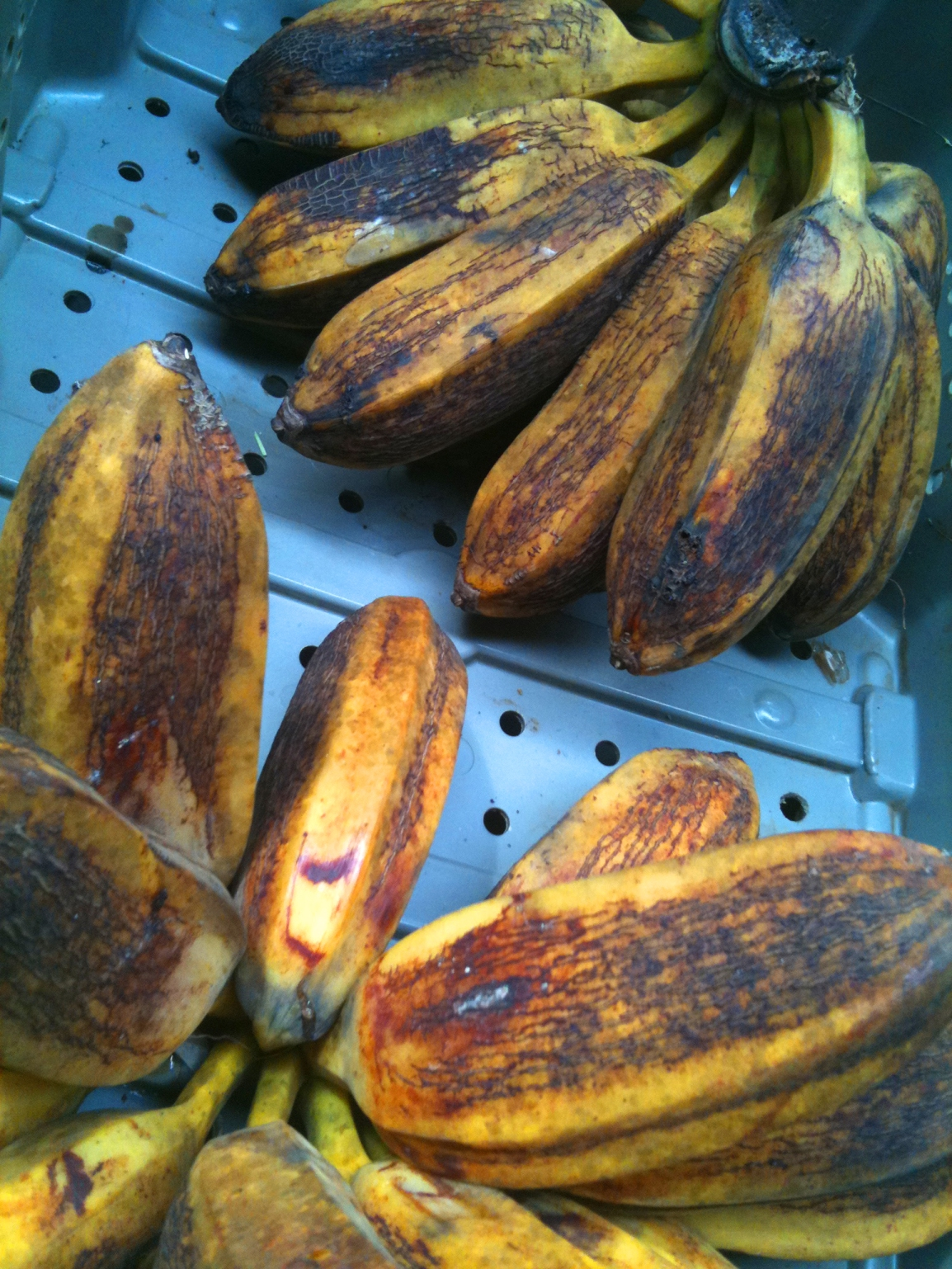 Two fat bunches of yellow plantains await sale at the ARTfarm farmstand.