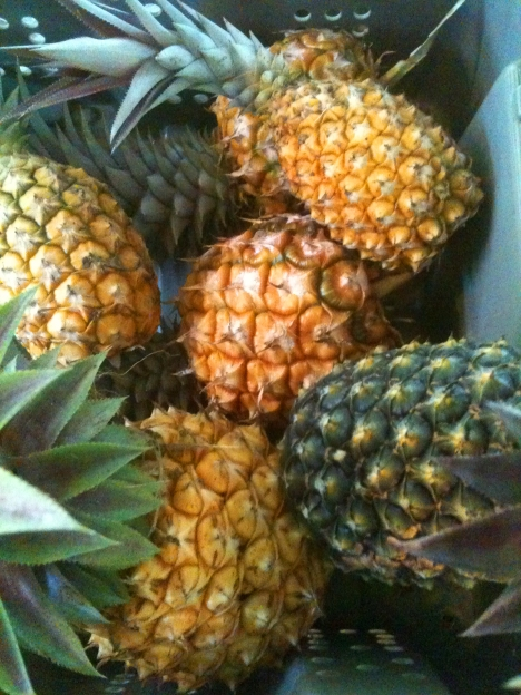 A harvest bin full of ARTfarm pineapples of different sizes, textures and colors