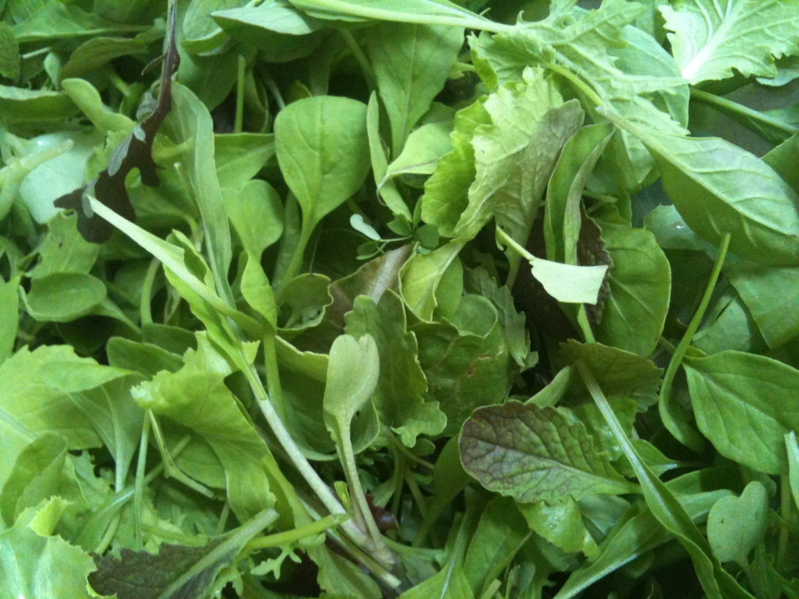 A closeup view of tiny tender leaves of mustard, arugula, radish and lettuce greens from the ARTfarm.