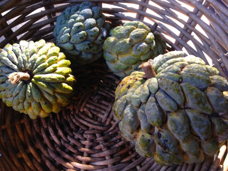 Yellowish green, pinecone-like sugar apples (sweetsop) of various sizes in a basket.