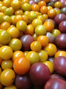 A big basket full of orange sungold cherry tomatoes and purple ball cherry tomatoes at ARTfarm