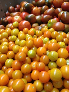 Freshly picked, ripe orange and yellow cherry and dark purple plum tomatoes in a large tub.
