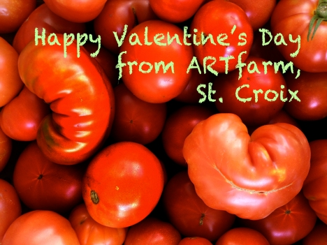 "Red juicy heirloom tomatoes in a pile, with one on top with a heart-shape. Text reads ""Happy Valentine's Day from ARTfarm, St. Croix"""