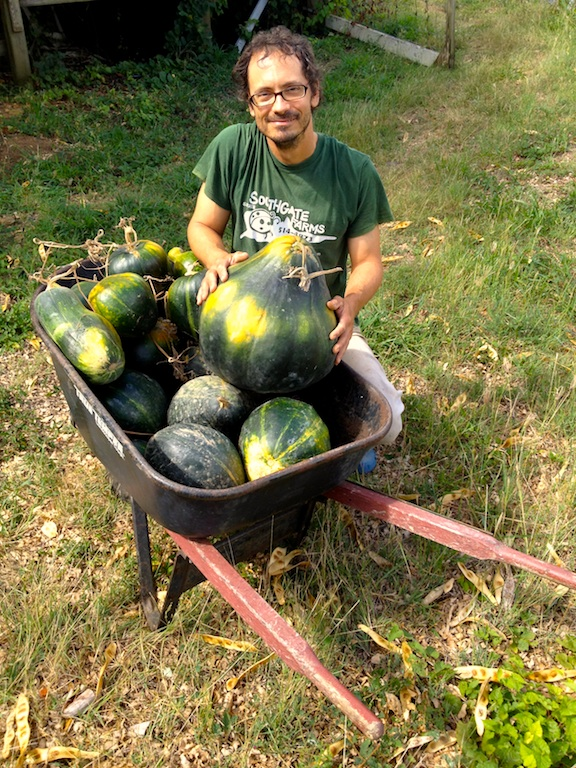 Farmer Luca with a large wheelbarrow full of green skinned pumpkins at ARTfarm.
