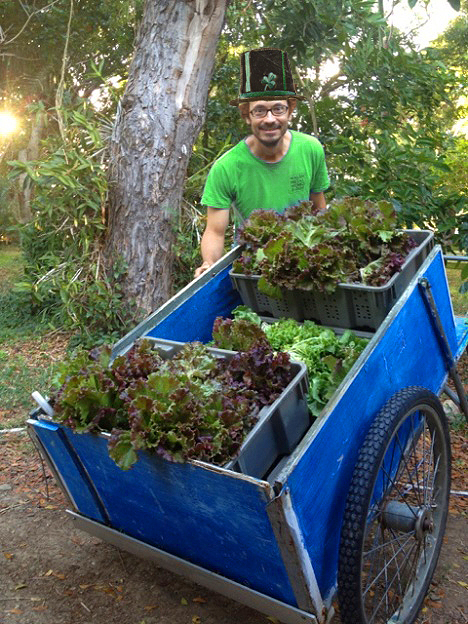 Our resident leprechaun Luca picked a lot of greens for you this morning!! A slightly doctored photo shows Farmer Luca sporting a leprechaun's hat and red hair, posing with a large farm cart full of fresh lettuce heads in red and green.