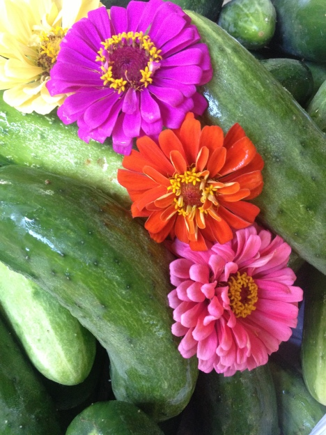 Four colorful zinnias peek out of a pile of fresh, crunchy cucumbers.