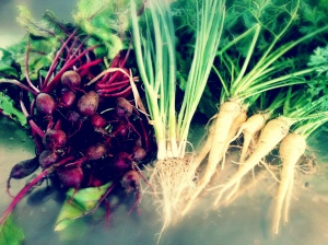 A pile of several dozen freshly harvested beets and their greens, a bunch of scallions, and a pile of white carrots with their greens rest on a stainless countertop at ARTfarm.