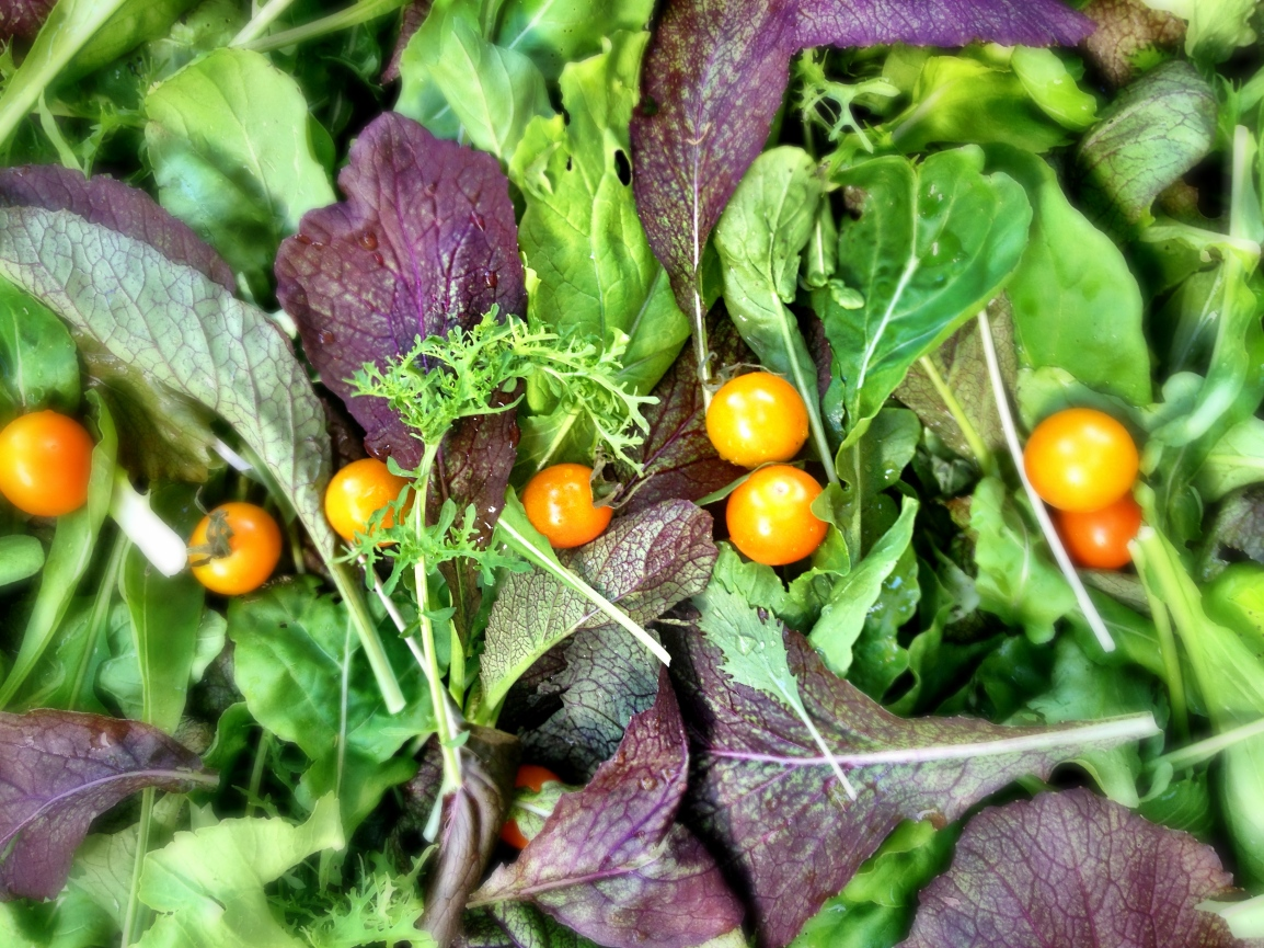 A variety of purple, green and burgundy whole leaf mesclun lettuces and greens are scattered in a box with a sprinkling of bright orange cherry tomatoes on top.