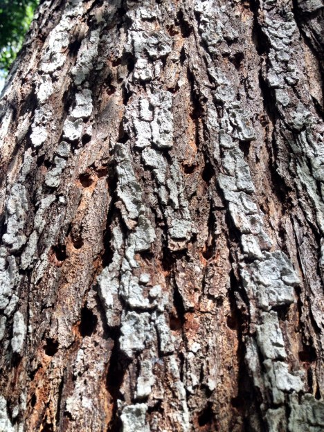 treeholes