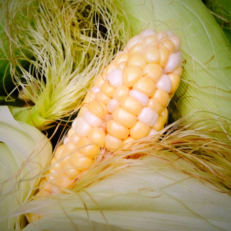 ARTfarm sweet corn