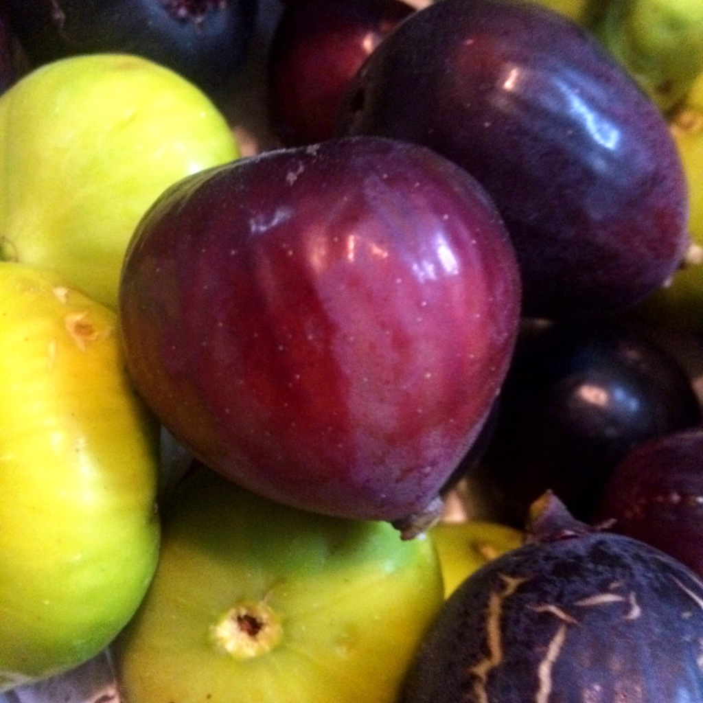 Mediterranean figs grown at ARTfarm! A romantic treat for yourself or a loved one!
