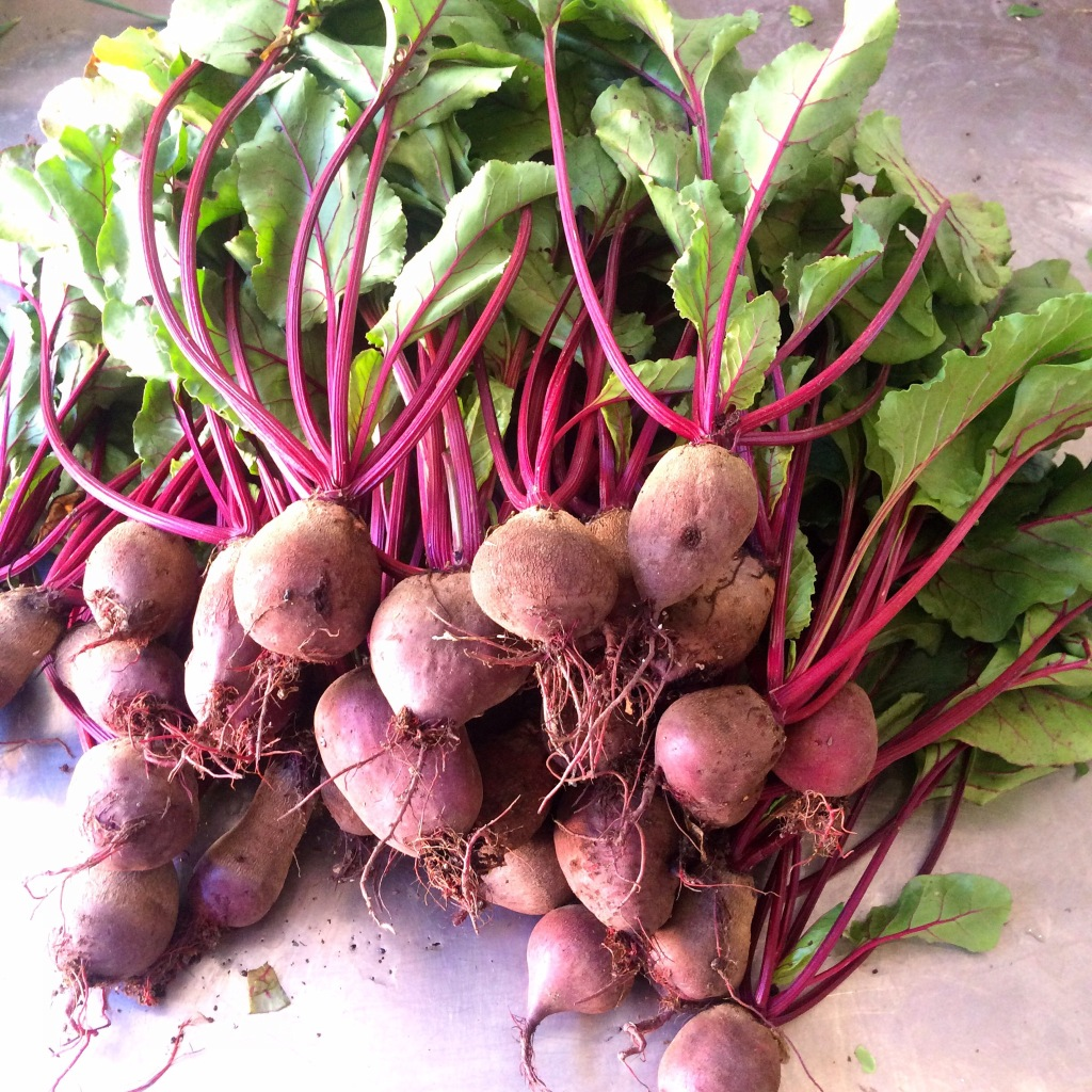 We've got beautiful big beets with tops ready for cooking or juicing! Yum!