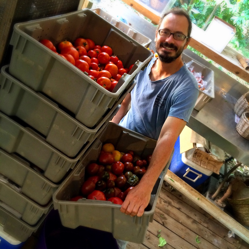 How many heirloom tomatoes can YOU eat? Please, HELP US!!