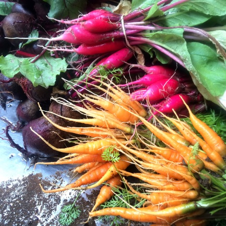 Radishes! Carrots! and Beets! Oh My!