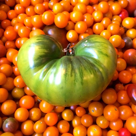 A heart-shaped green heirloom tomato for St. Patty's Day! Enjoy the parade!