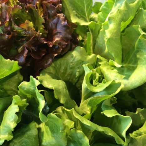 Beautiful ARTfarm salad greens for the sweet mix!