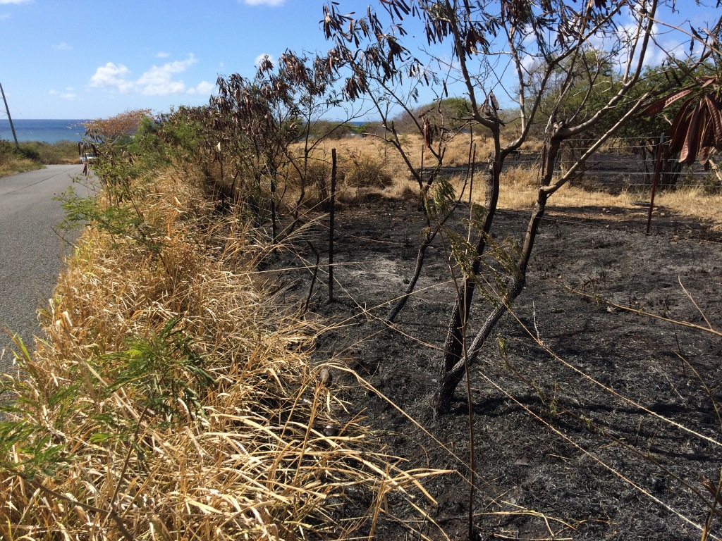 Looking south along the fence near the east end of the farm. Evening brush fires are most likely deliberately set, according to officials at the VIFS.