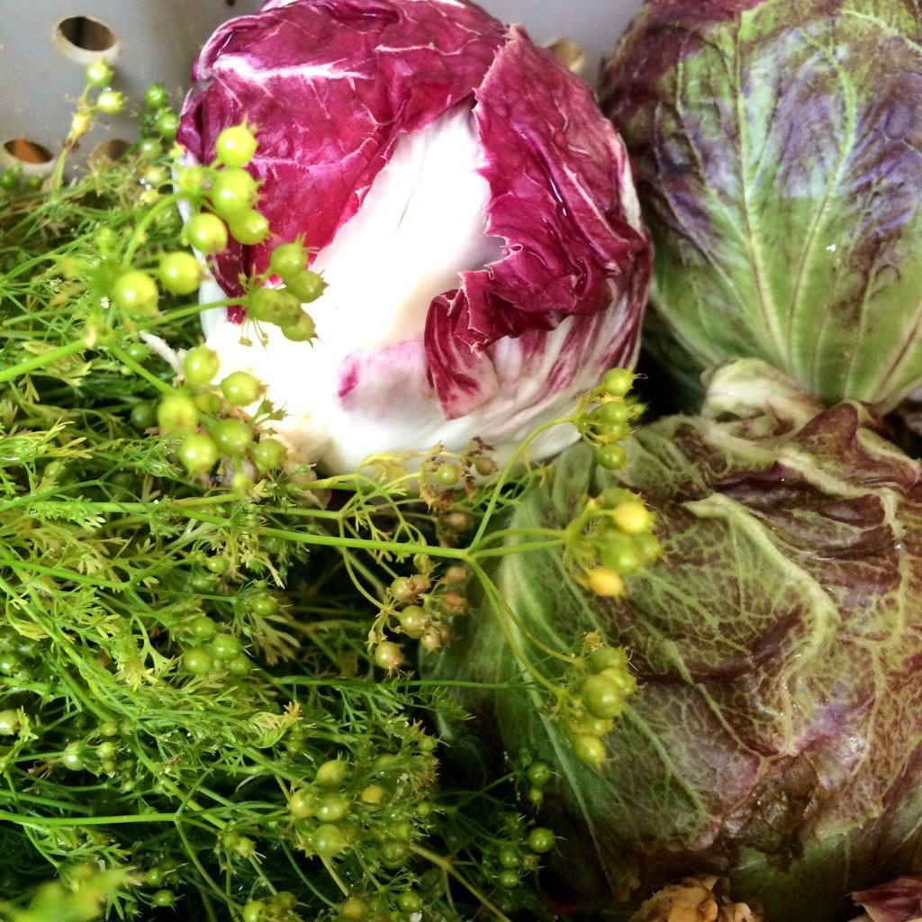Beautiful heads of radicchio to enliven any dish with color and panache!