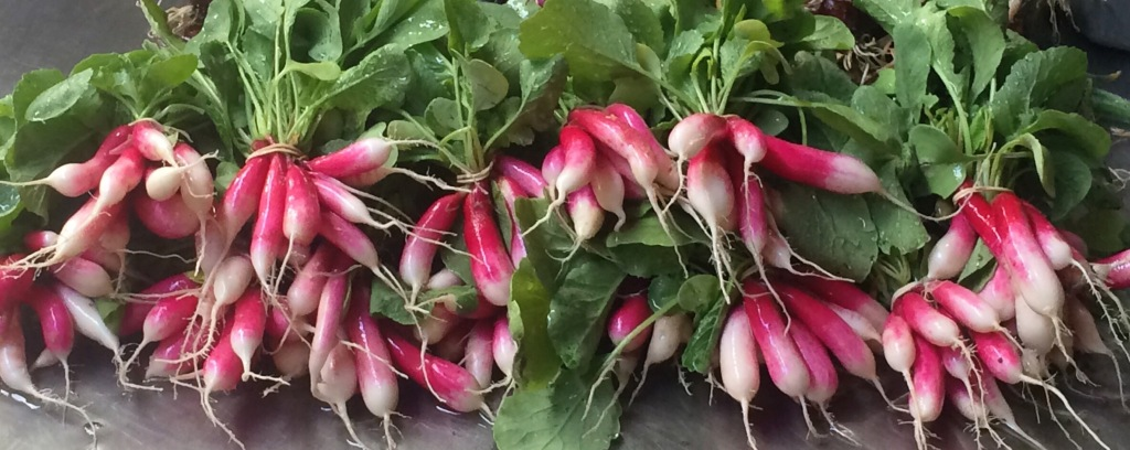 Eat the whole thing! These crunchy ARTfarm radishes are sold with fresh, delicious green tops. The tops are great rinsed, chopped, and dropped into, sprinkled over, or wilted on just about any savory dish you are making! Slightly peppery (less so when cooked), and oh-so-good for you!