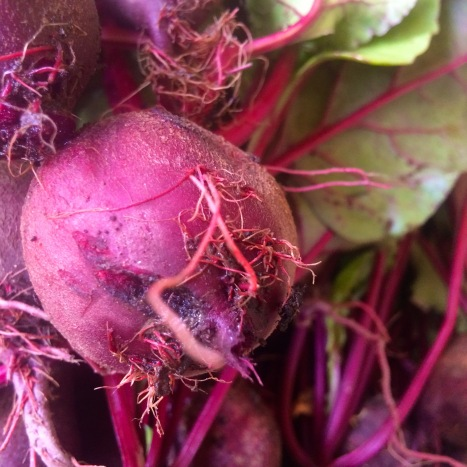 "You can't beat beets for nutrition and ""delicion"". These hot weather beets are so sweet and delicious! Raw or cooked, you need them!! And we never tire of taking pictures of beets and subjecting our customers to them! Feast your eyes on this beauty!"