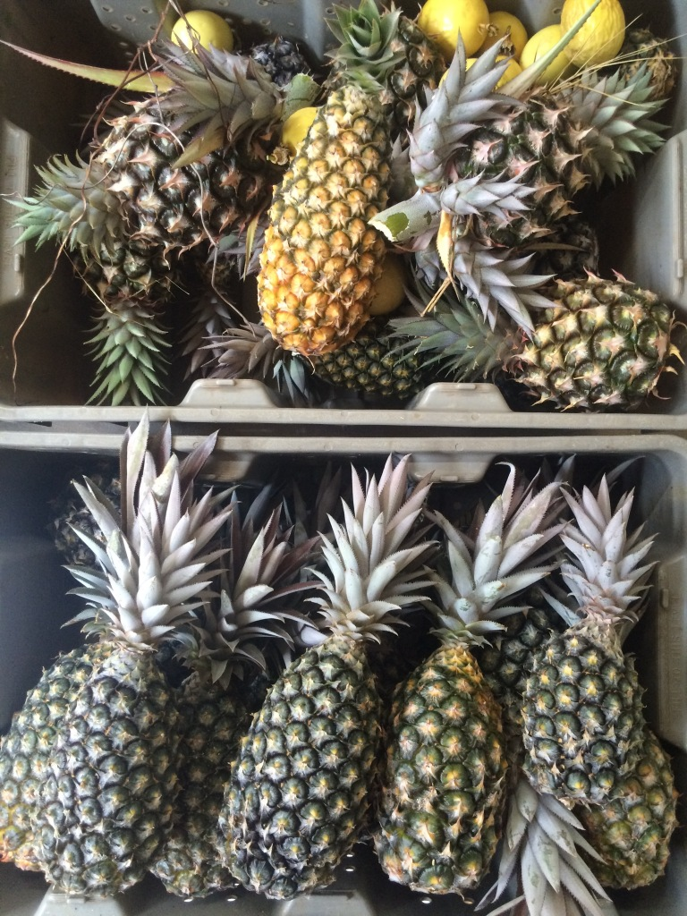 More pineapples today! ARTfarm pineapples are ridiculously sweet this year, maybe because of all the dry weather. June seems to be our pineapple month!