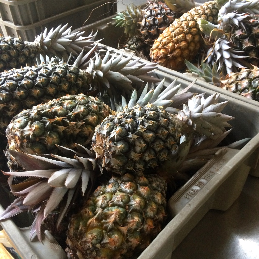 Summer is the season for pineapples at ARTfarm! Sweet sweet sweet!