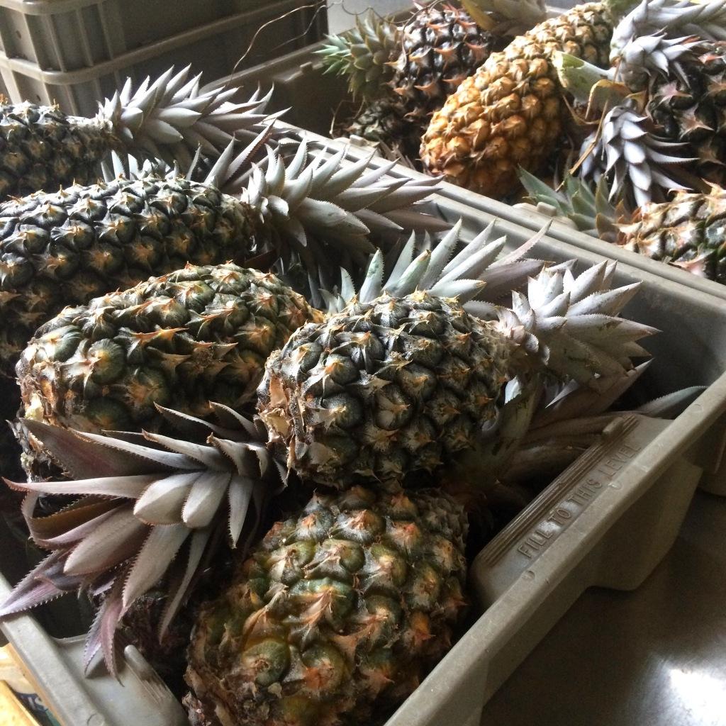 Summer is the season for pineapples at ARTfarm! Sweet sweet sweet!