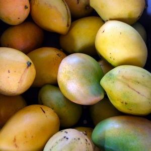 Tita's Viequen Butterball mangoes...