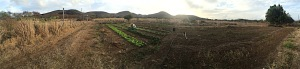 It's July 2015 and there has been no substantial rain for months. This panorama of the center of the farm shows the contrast between irrigated and non-irrigated areas.