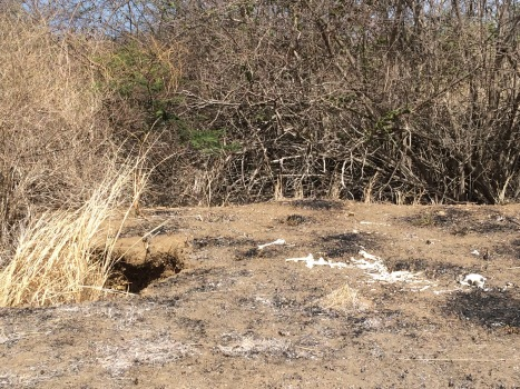 A photo taken in bright sunlight shows a barren landscape of dry soil and dead trees at the edge of a gully. The scattered skeleton of a deer rests in the foreground.