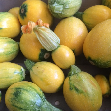 A pile of yellow summer squash, one with a blossom still on the end of the fruit.