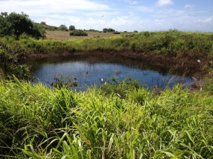 Water for watermelons! One of our ponds. This one replenishes the water table.