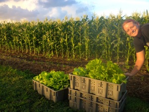 Pop-up Farmer Katie photobombs the early morning greens harvest.