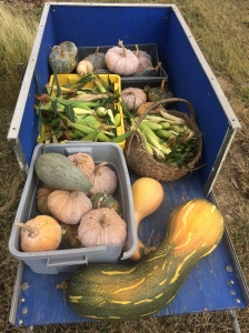 A blue wooden farm cart holds boxes and bins of pumpkins, squashes, corn and other produce.