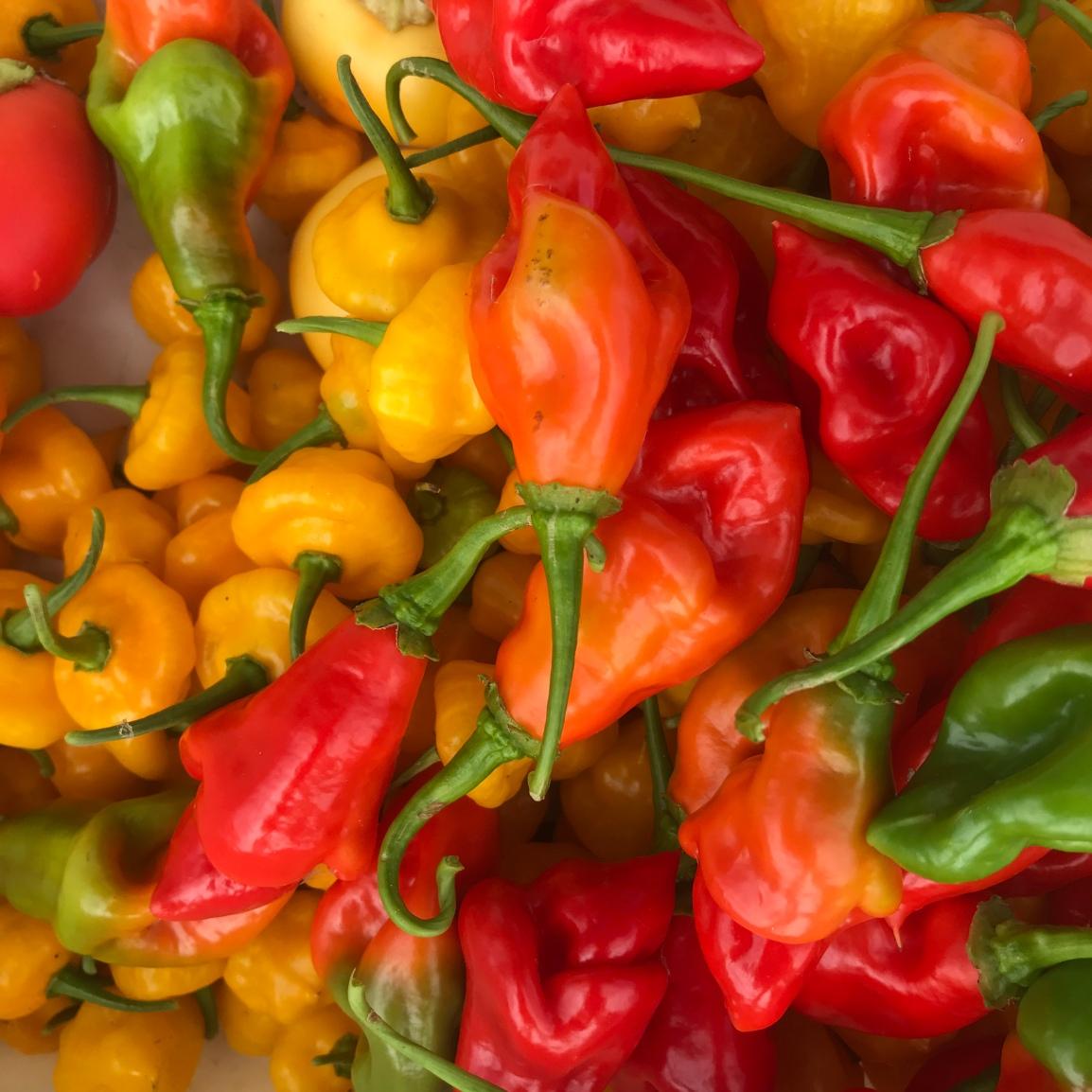 Saturday ARTfarm Produce Pickups 2/20/2021: SeasoningPeppers