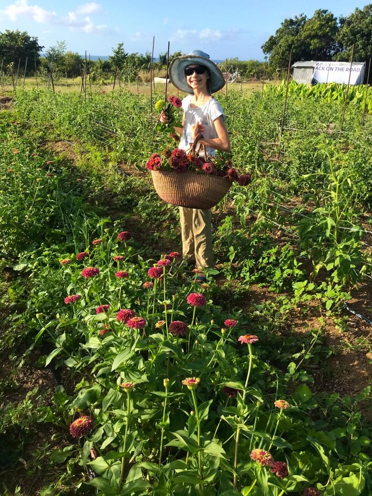 A young farmer harvesting zinnia flowers at ARTfarm.