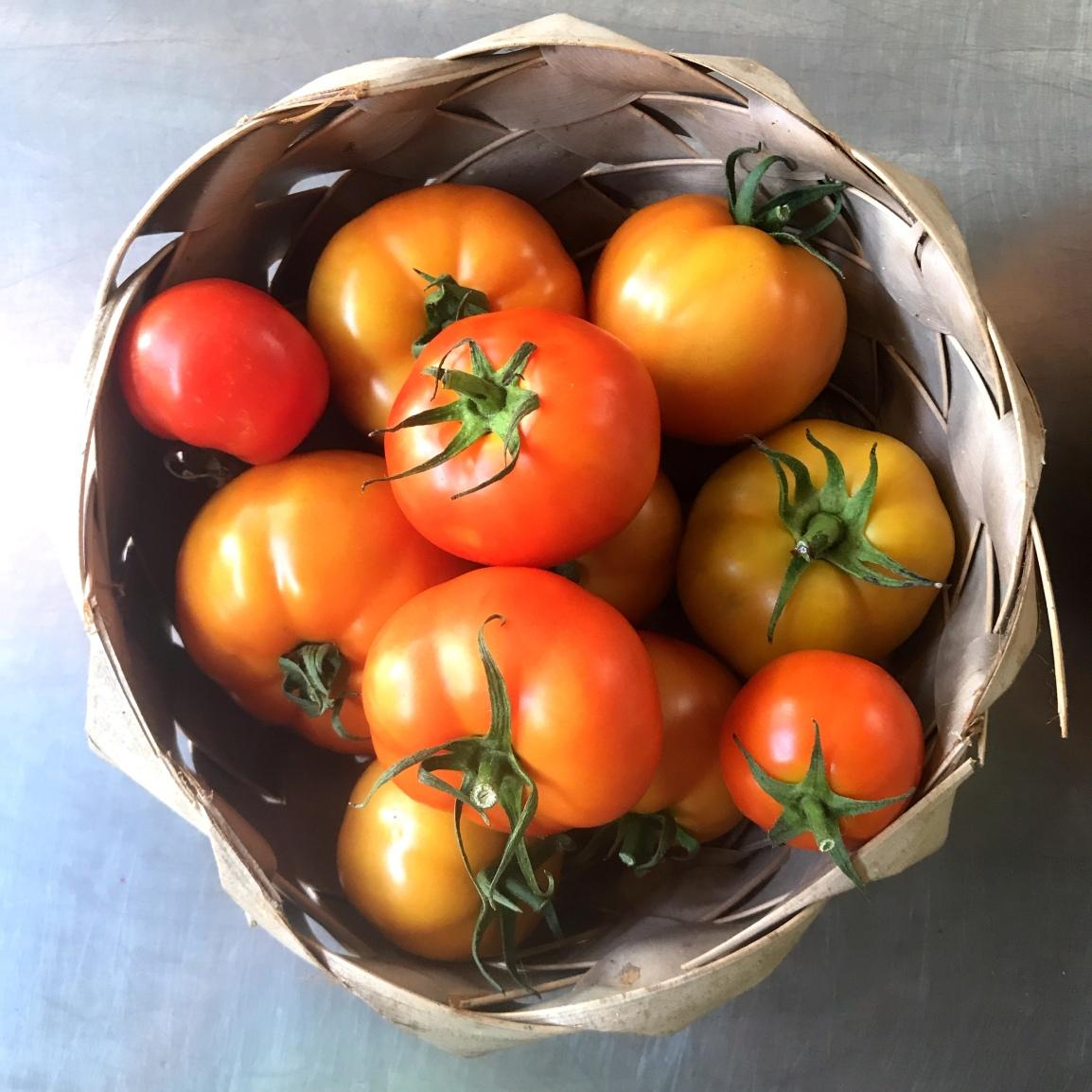 Wednesday ARTfarm Produce Pickups 1/6/2021: Toh-MAH-tohz(corrected)