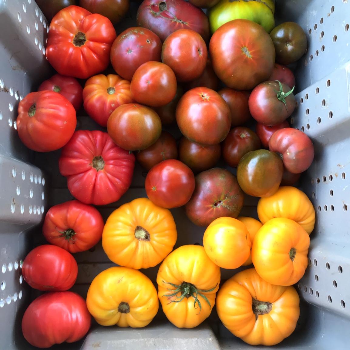 Wednesday ARTfarm Produce Pickups 2/3/2021: RainbowSmiles