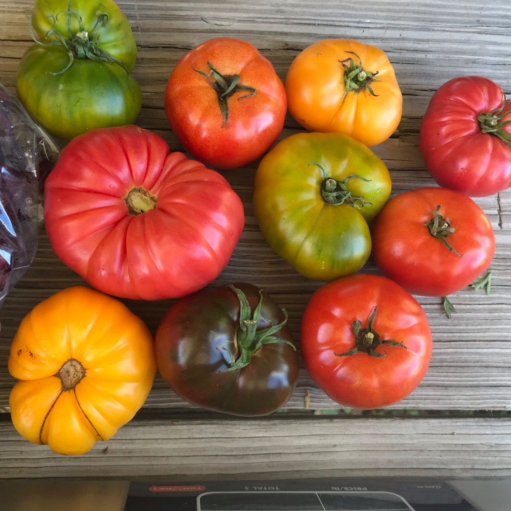Heirloom tomatoes in a rainbow of colors
