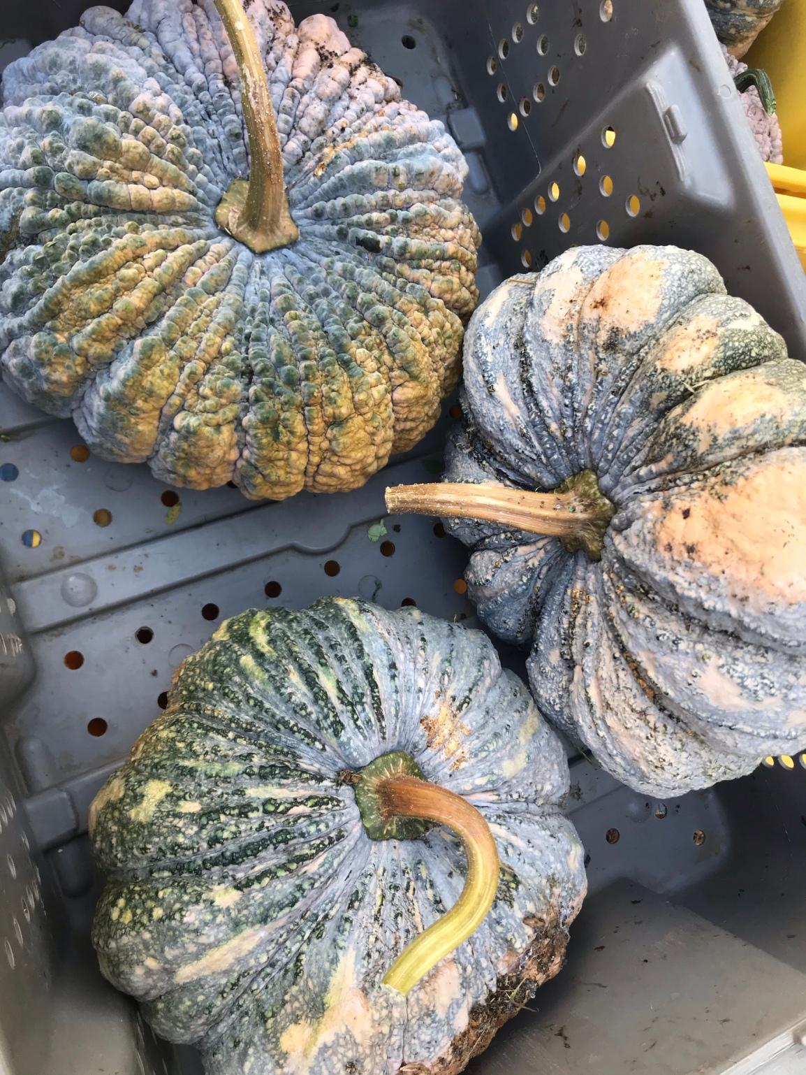 Wednesday ARTfarm Produce Pickups 3/10/2021: Drytimes!