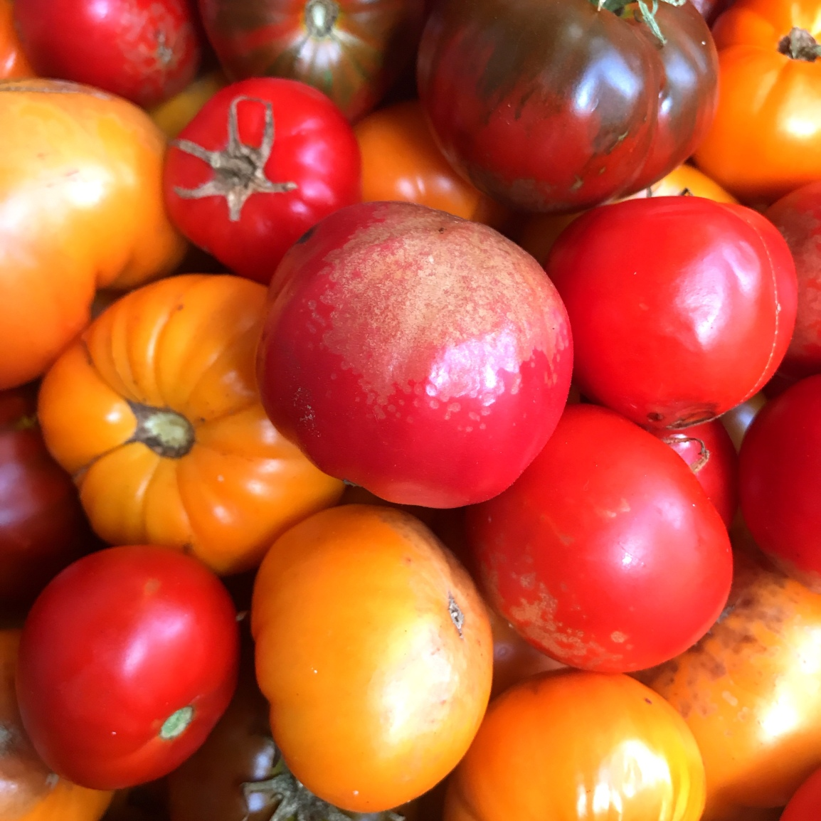 Wednesday ARTfarm Produce Pickups 3/3/2021: Ugly tomatoes