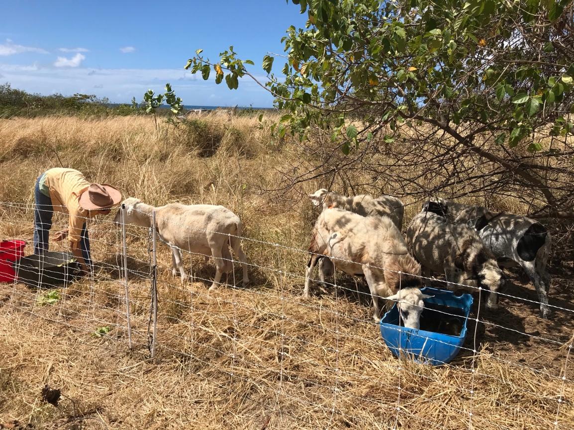 Saturday ARTfarm Produce Pickups 3/13/2021: Downsizing…