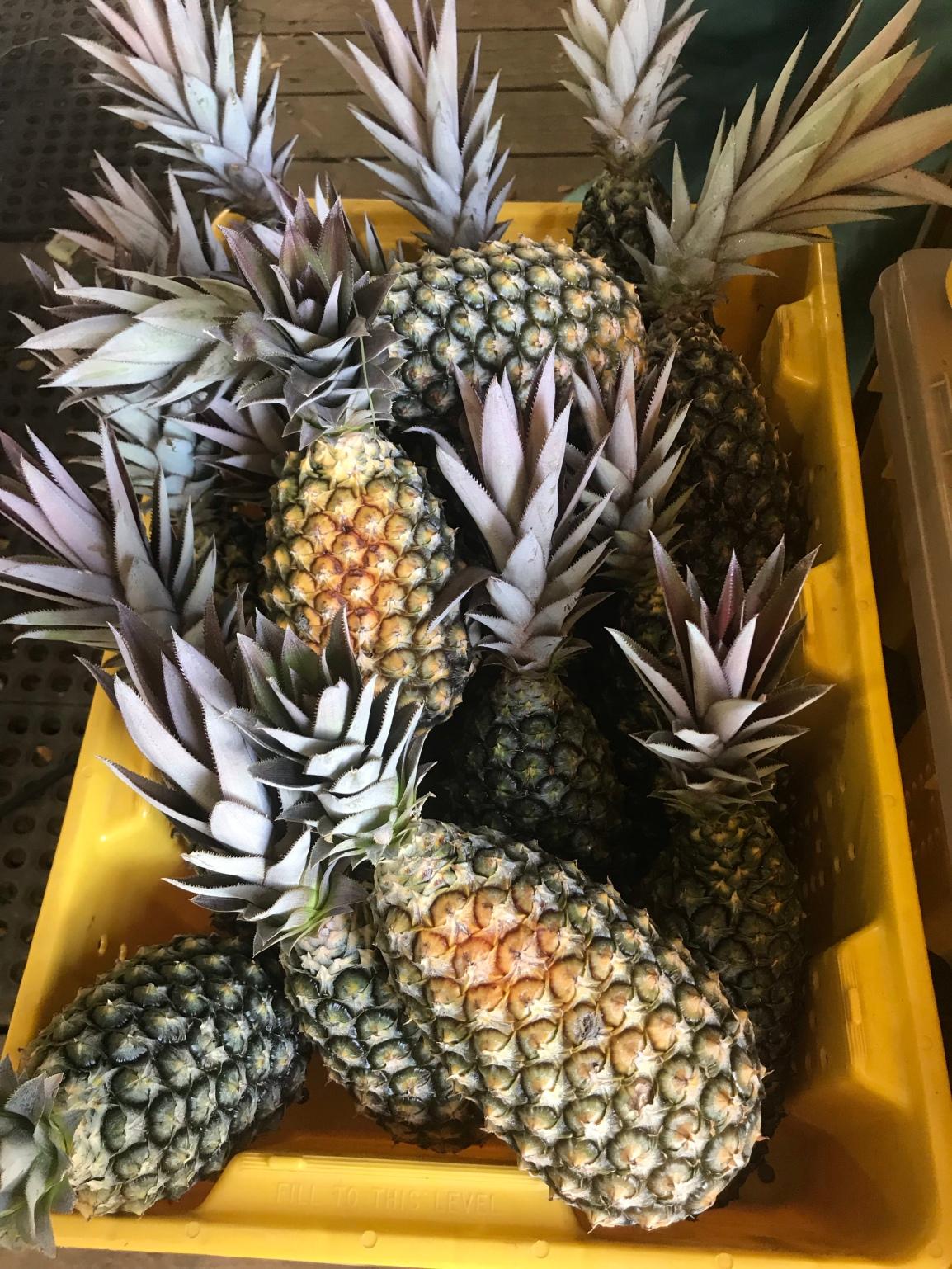 ARTfarm Pineapple Pop-Up Tuesday AfterWork!